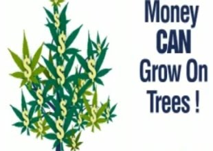 marijuana_money_tree