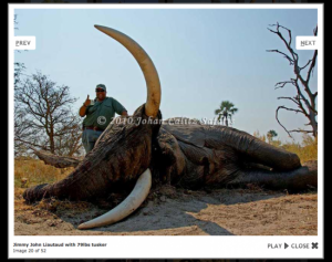 Jimmy John's owner, Jimmy John Laiutaud poses with an endangered African elephant he killed on a canned hunt.